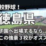 「高校野球」徳島県で甲子園へ出場したいなら、この強豪3校へ進学しなさい!そのおすすめ理由も解説